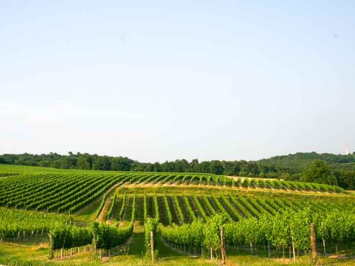 Domaine viticole chateau larquey caudrot grand vins de bordeaux