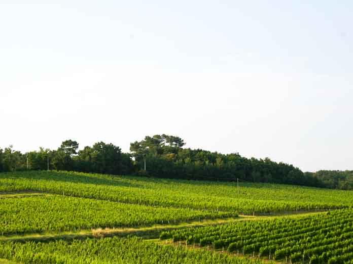 Domaine viticole ete cuvee selection Bordeaux superieur Blanc Moelleux chateau larquey caudrot