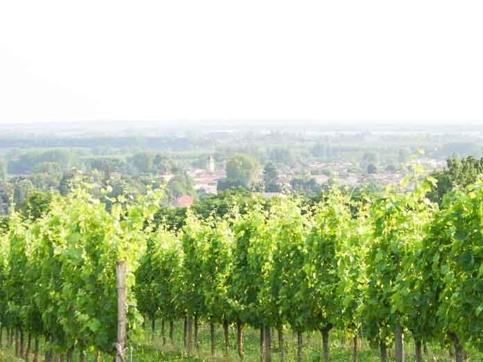 Domaine viticole ete Cuvee Selection Bordeaux rose Chateau Larquey Caudrot France