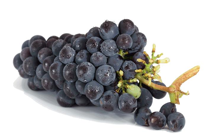 grappe de raisins rouge merlot cabernet franc grand vins de bordeaux